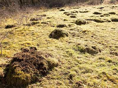 Ant hills at Coldwell