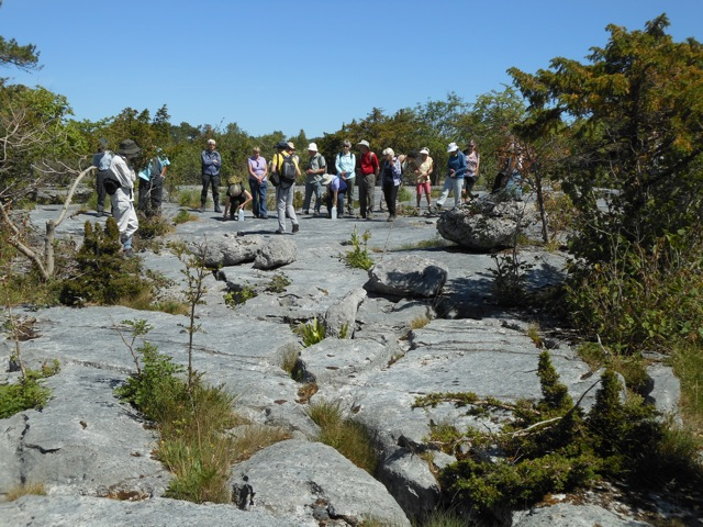 Gait Barrows limestone pavement with study group