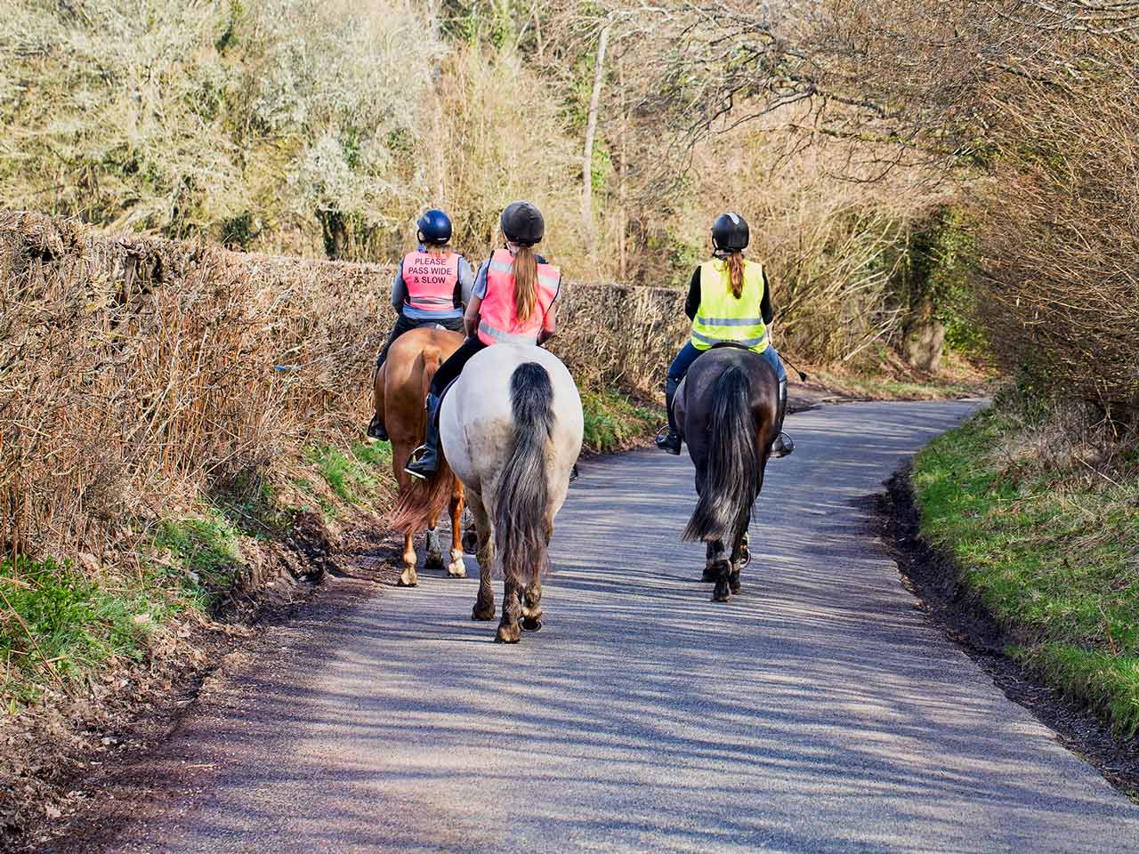 Horse riders on the road