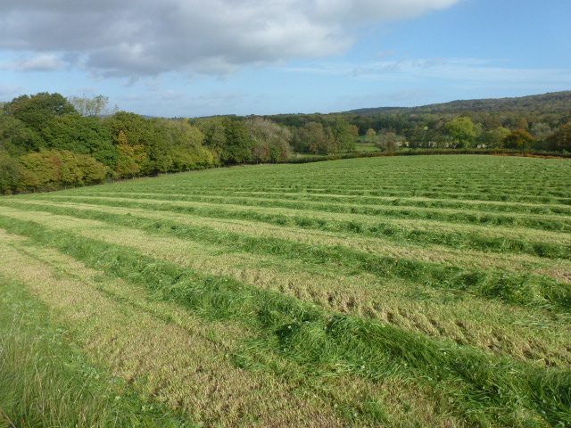 Coldwell North Meadow cut for hay