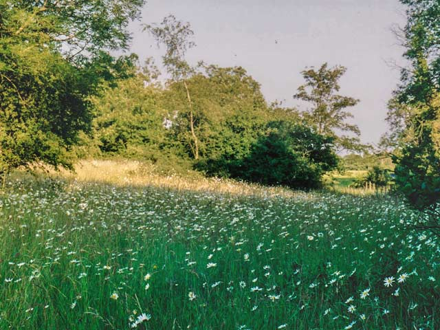 Wild flowers abound in Coldwell Farm pasture, 1992