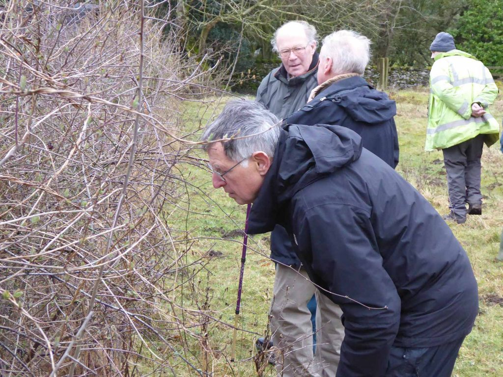 Enthusiastic hunters of Brown Hairstreak eggs at Coldwell Parrock and Gair Barrows