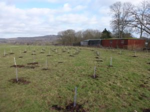 Tree planting at Coldwell Bank