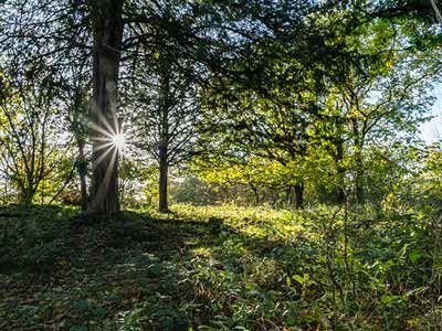 Coldwll-Parrock-woodland-1